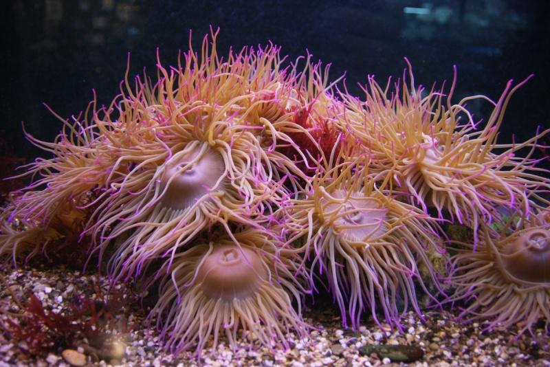 аквариум в севастополе