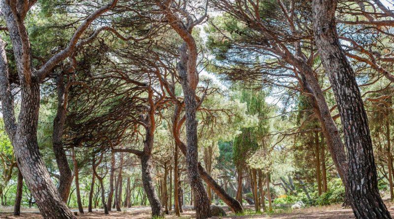 Форосский парк на Южном берегу: наследие XIX века