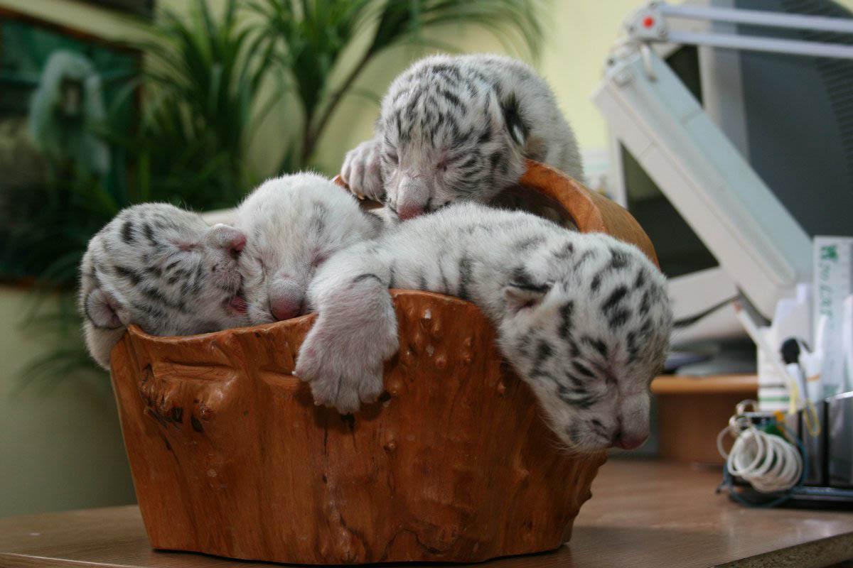 ялтинский зоопарк