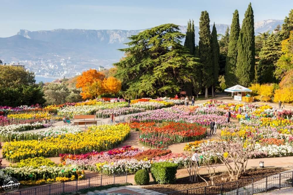 никитинский ботанический сад в ялте фото красиво