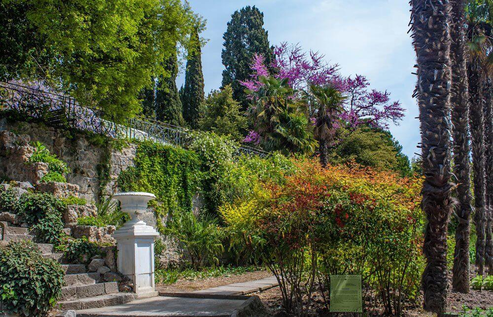 ботанический сад никитский в крыму