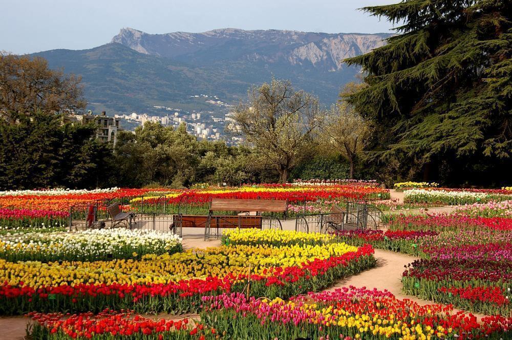 ботанический сад крым