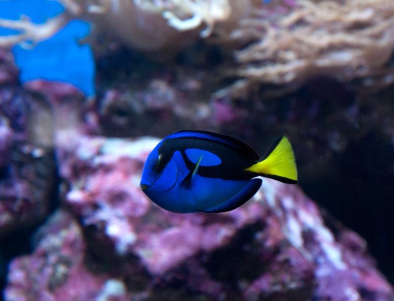 аквариум в севастополе фото
