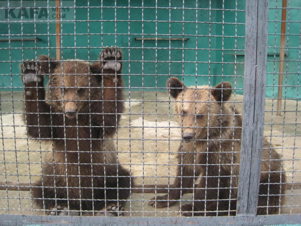 Крымский парк львов Тайган