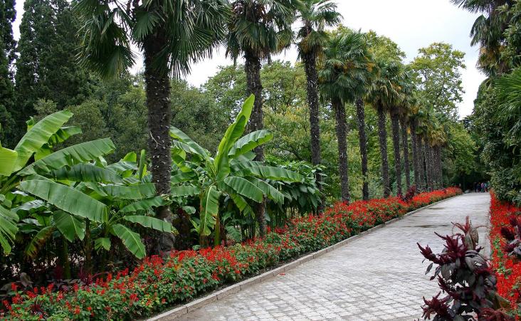 Никитский ботанический цена