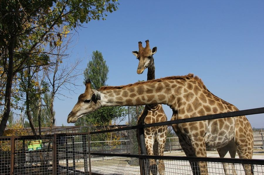 Крым парк львов Тайган