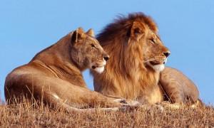 парк львов тайган в крыму