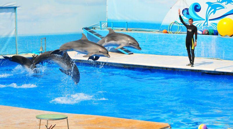 Дельфинарий в Севастополе: посетите шоу морских животных