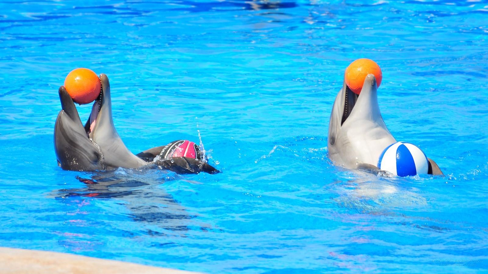 дельфинарие в севастополе