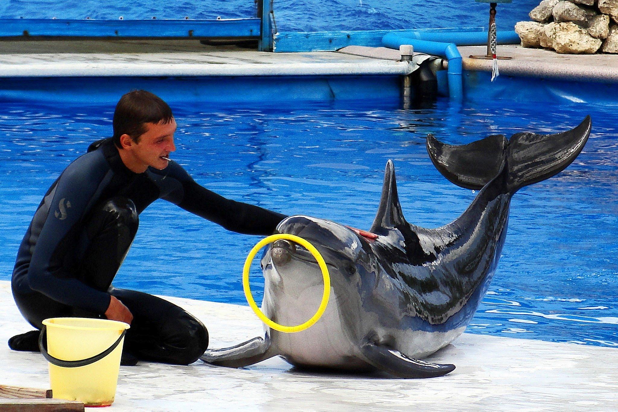 дельфинарию в севастополе