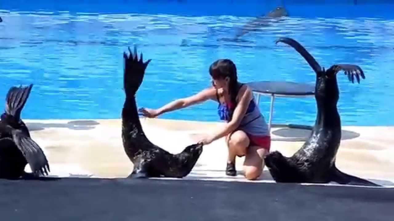 стоимость дельфинария в севастополе