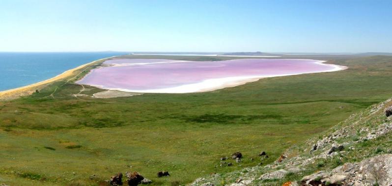 когда кояшское озеро становится розовым