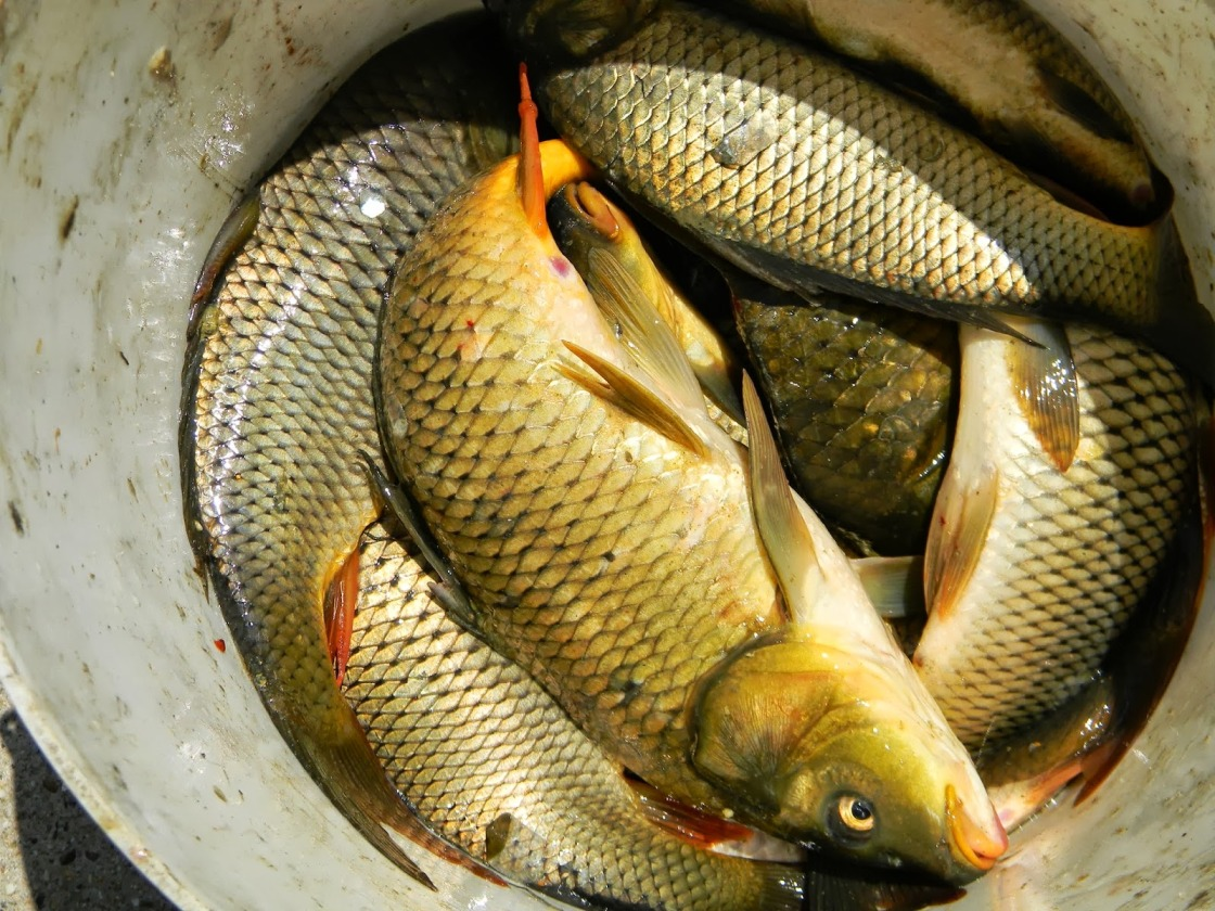 рыбалка в крыму 2018