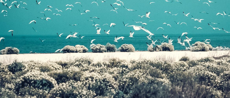 крым лебяжьи острова фото